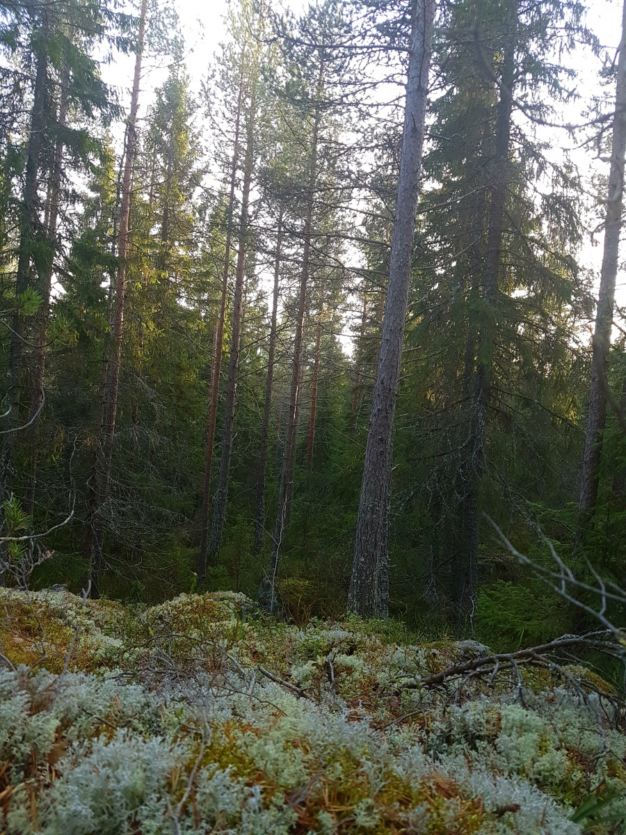 swedenautumnforest9