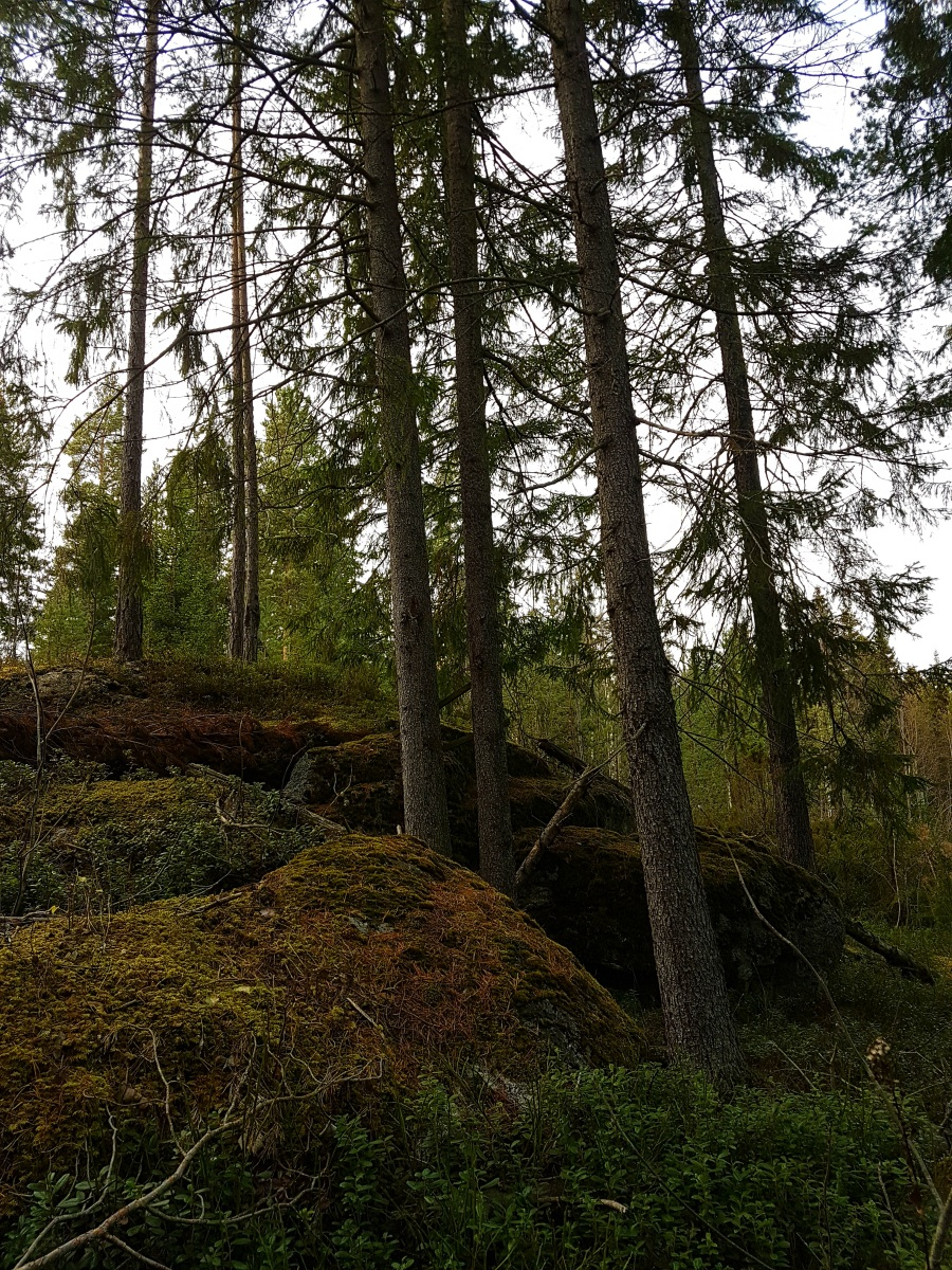 swedenforestpicture2