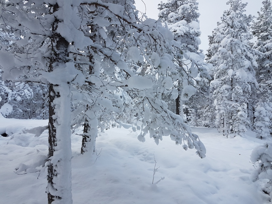 wintersweden1