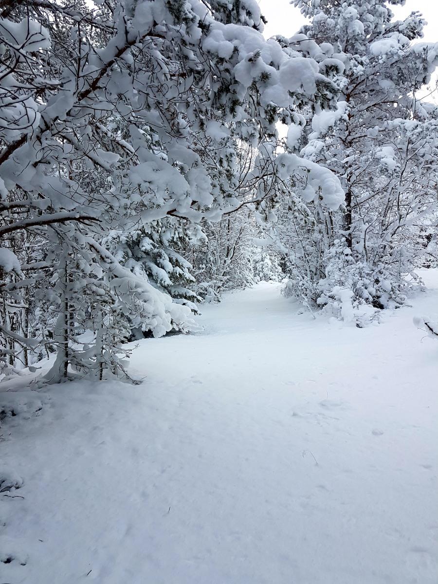 wintersweden11