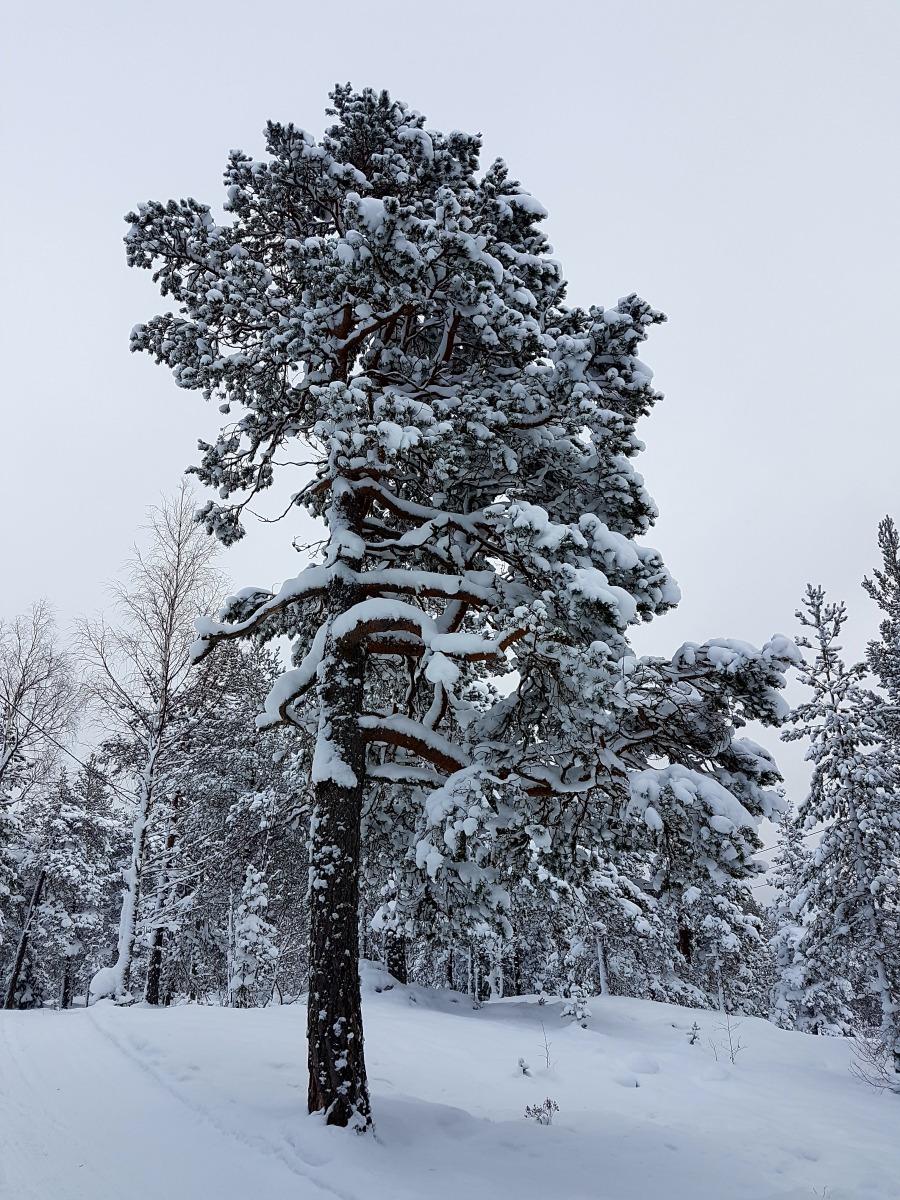 wintersweden12