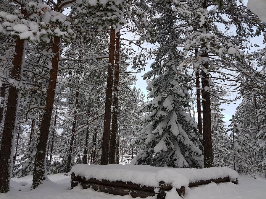 wintersweden14
