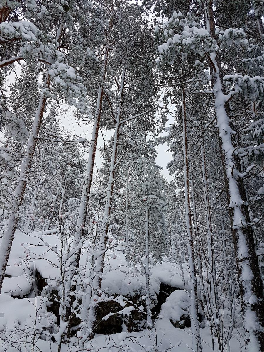 wintersweden2