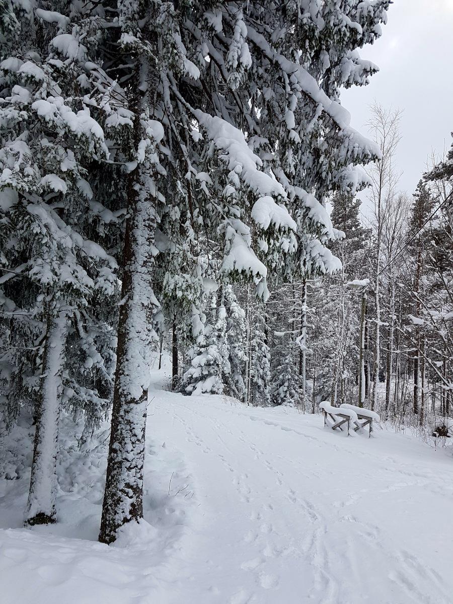 wintersweden3