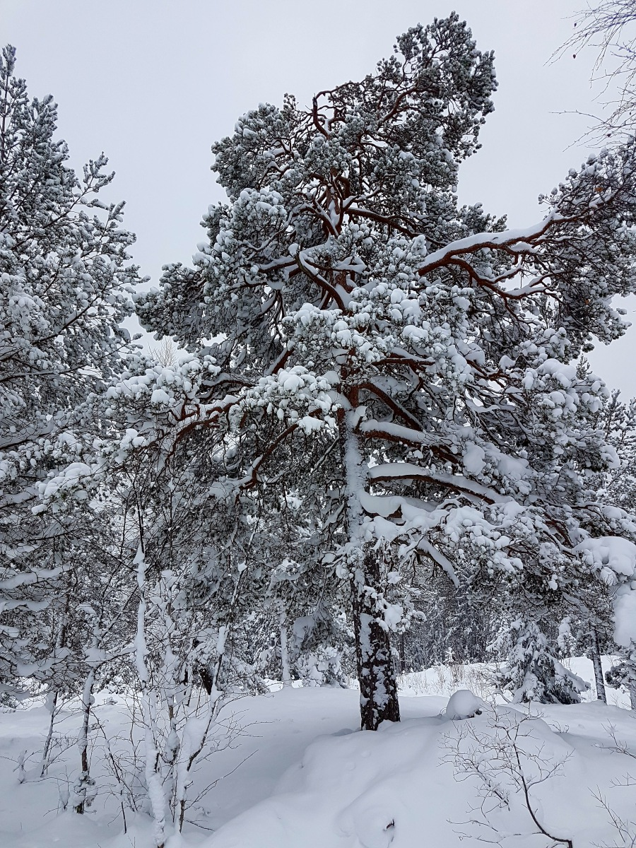 wintersweden6