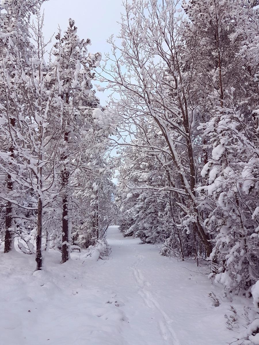 wintersweden7