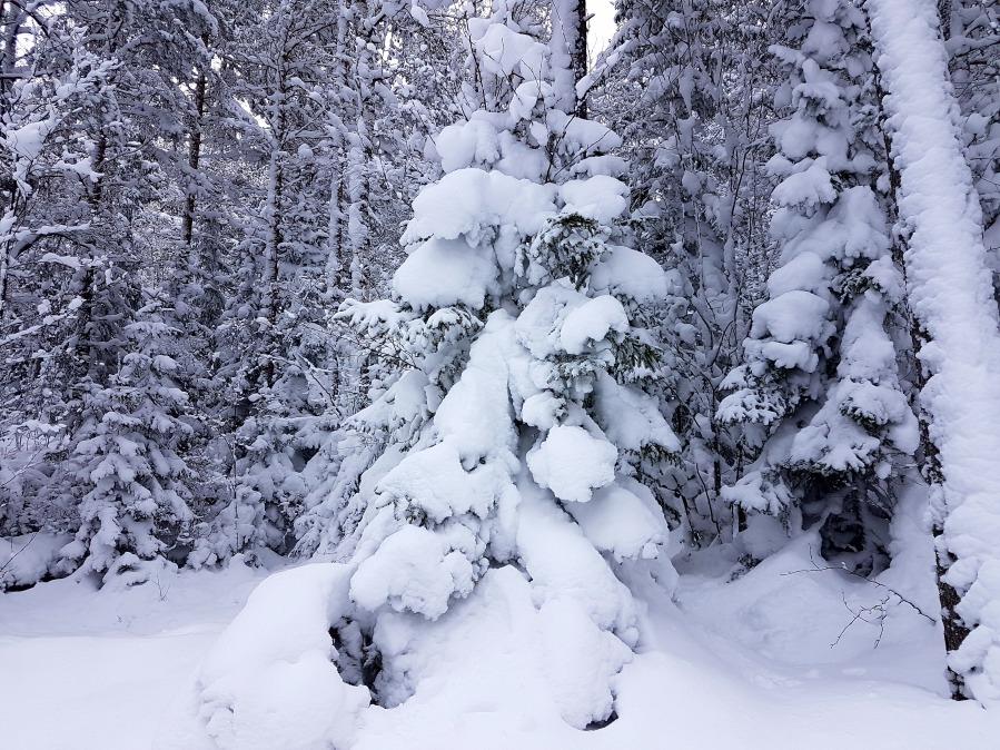 wintersweden9